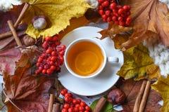 Une photo d'automne avec une tasse de thé, de feuilles colorées, de baies de cendre, de châtaignes, d'une écharpe chaude et de bâ photographie stock
