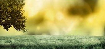 Une photo d'herbe verte Photos libres de droits