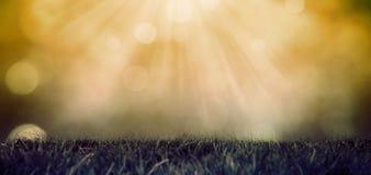 Une photo d'herbe verte Image stock
