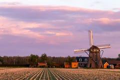 Une photo de coucher du soleil de champ n?erlandais d'agriculture avec le moulin ? vent photos libres de droits