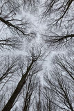 Une photo des arbres dans une forêt avec une perspective de la recherche dedans Image stock