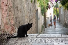 Une photo du chat sur les rues d'une ville balkanique photos libres de droits