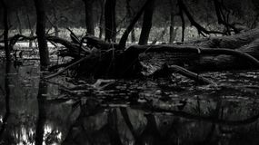 Une photo noire et blanche là ont un bon nombre d'arbre comme comme une forêt photo stock