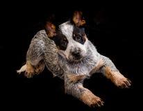 Une photographie d'un chien pris tandis qu'il est sur le point de se lever Image stock