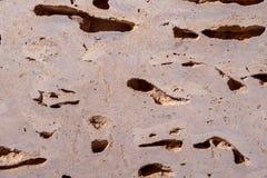 Une pierre faite à partir des coquilles de couleur jaune il y a beaucoup de trous et de cavités à l'intérieur image libre de droits