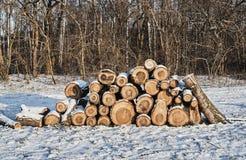Une pile de bois coupé en hiver dans une forêt Images libres de droits