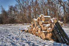Une pile de bois coupé en hiver dans une forêt Photo stock