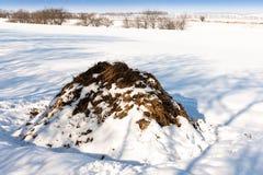 Une pile de bouse de vache dans un domaine en hiver photos stock