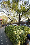 Une pile de choux à vendre dans ville du ` s de Pékin la vieille Image libre de droits