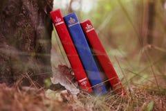 Une pile de livres fermés extérieurs Livres dans la forêt Image stock