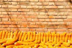 Une pile de maïs d'or avec le fond de mur de briques photographie stock libre de droits