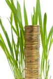 Une pile de pièces de monnaie aiment l'élevage d'herbe Images stock