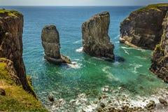 Une pile de roche en mer peuplée en multipliant Raverbill triche sur la côte de Pembrokeshire, Pays de Galles Photos stock