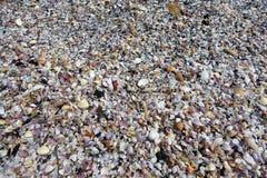 Une pile des coquilles OM menteur la plage Photographie stock libre de droits