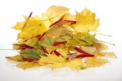 Une pile des feuilles d'automne images libres de droits