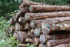 Une pile des identifiez-vous la forêt photo stock