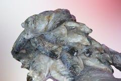 Une pile des poissons Photos stock