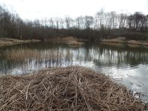 Une pile des roseaux par le lac photo stock