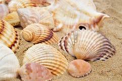 Une pile des seashells photographie stock libre de droits