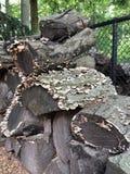 Une pile en bois au printemps Image stock