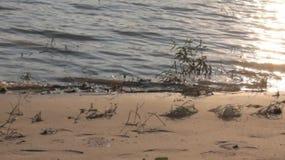 Une plage sur le Danube banque de vidéos