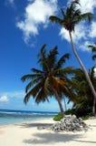 Une plage tropicale avec une paume Photo stock