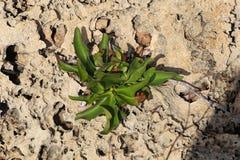 Une plante verte au centre de composition images stock