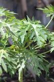 Une plante verte pendant une saison d'?t? images libres de droits