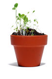 Une plante verte s'élevant dans un bac de centrale Images libres de droits