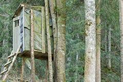 Une plate-forme en bois élevée connue sous le nom de support d'arbre ou les cerfs communs se tiennent Photo libre de droits