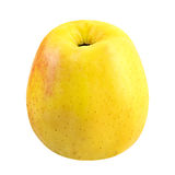 Une pomme jaune d'isolement sur le fond blanc Photos stock