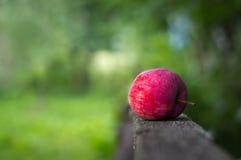 Une pomme rouge s'étend sur les barrières dans le jardin image stock