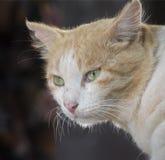 UNE POSE INDIENNE DE CAT image stock