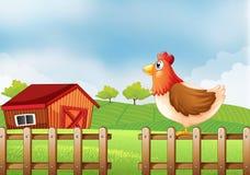 Une poule au champ avec un barnhouse Photo stock