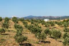 Une pousse de paysage de ferme avec les plantes vertes courtes avec éloigné images stock