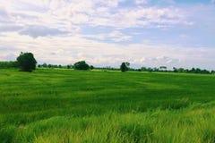 Une prairie Photos libres de droits