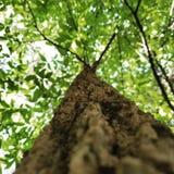 Une prise d'arbre beaucoup de beauté images stock