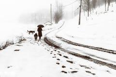 Promenade pluvieuse avec des chiens Photos stock