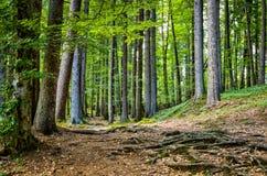 Une promenade dans la forêt Images libres de droits