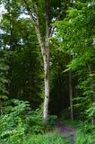 Une promenade dans la forêt images stock
