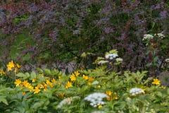 Une promenade dans le jardin botanique Photo stock