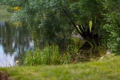 Une promenade dans le jardin botanique Image libre de droits
