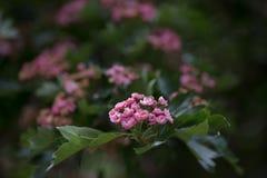Une promenade dans le jardin botanique Photographie stock libre de droits