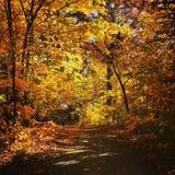 Une promenade dans les bois Images libres de droits
