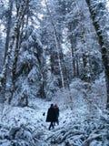 Une promenade dans les bois Image stock