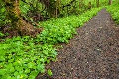Une promenade dans les bois Photo libre de droits