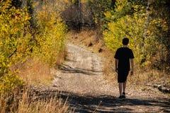 Une promenade dans les bois pendant l'automne images stock