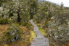 Une promenade en bois enroule sa voie par la forêt indigène au début de la promenade de St James de multi-jour au Nouvelle-Zéland images stock