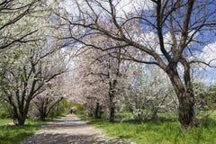 Une promenade en parc Images libres de droits