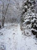 Une promenade neigeuse Image libre de droits